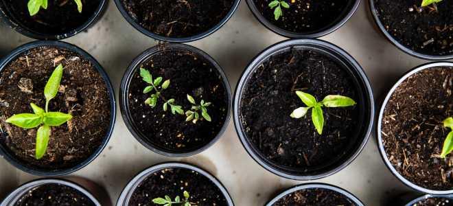 Растем или ростем: как правильно пишется